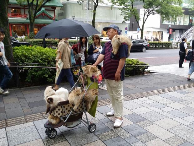 Shibuya Cats